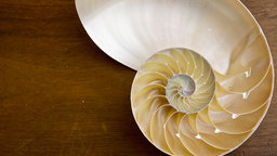 Visualizing the Fibonacci Numbers